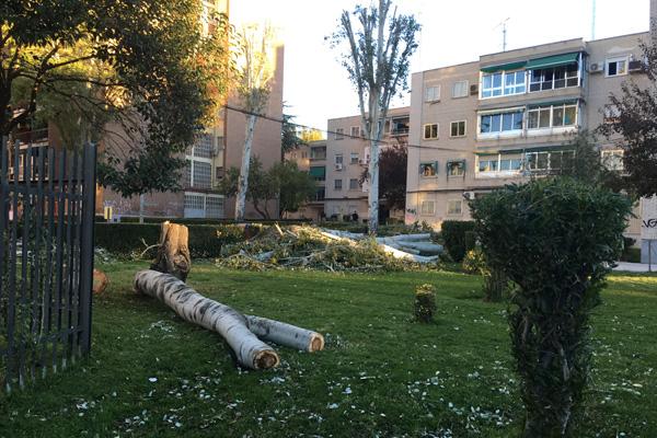 ¿A qué es debida la tala de cientos de árboles en nuestra ciudad?