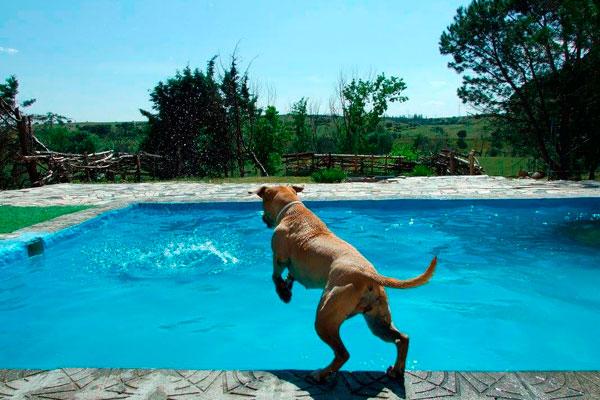 Descubre las piscinas para perros en madrid soydefuenla for Piscina para perros madrid