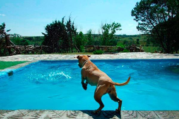 Descubre las piscinas para perros en Madrid