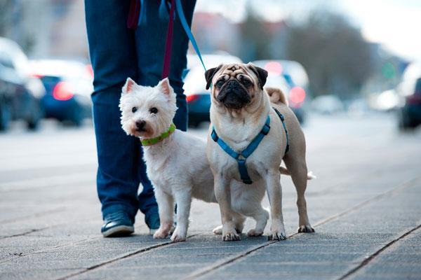 La nueva normativa prohibe la exhibición de animales en escaparates y practicar la  eutanasia a los animales abandonados, entre otras cuestiones