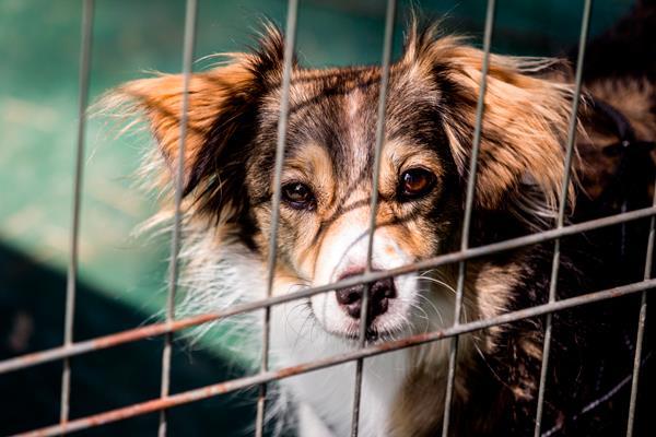 Las casas de acogida de animales, a examen